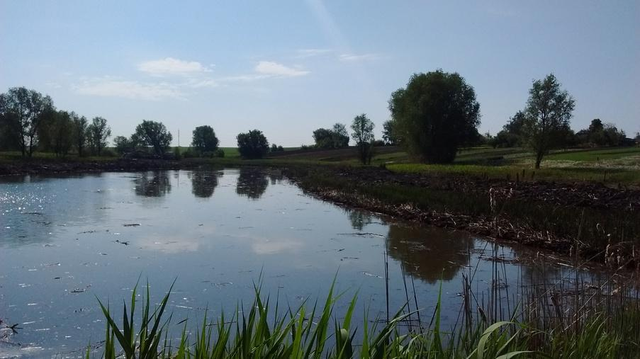 Выполнение работ по очистке пруда - Eridon Bud - Изображение - 3