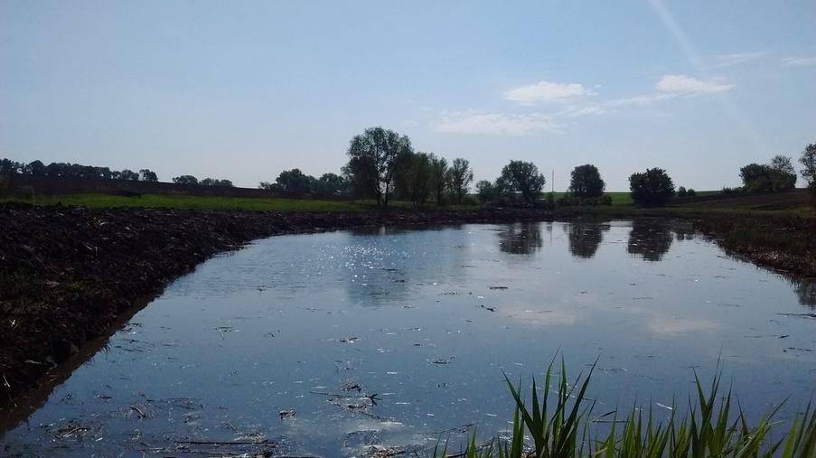 Performing work on cleaning the pond - Eridon Bud - Image - 4