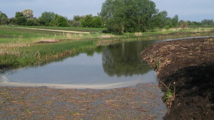 Performing work on cleaning the pond - Eridon Bud - Image - 6