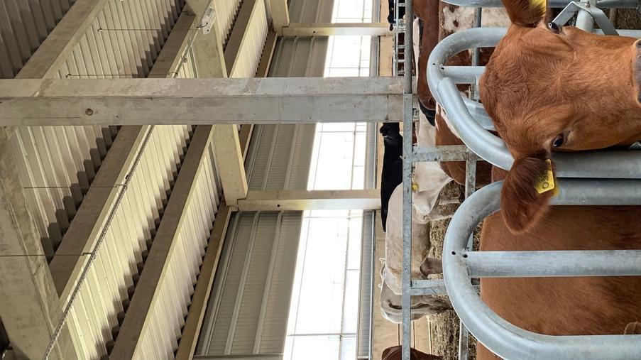 Реконструкція молочно-товарної ферми у Переяслав-Хмельницькому районі - Eridon Bud - Зображення - 2